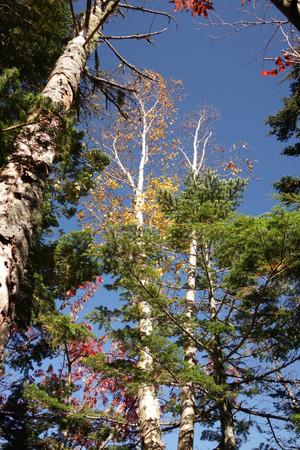 majakkaの求める森の景色